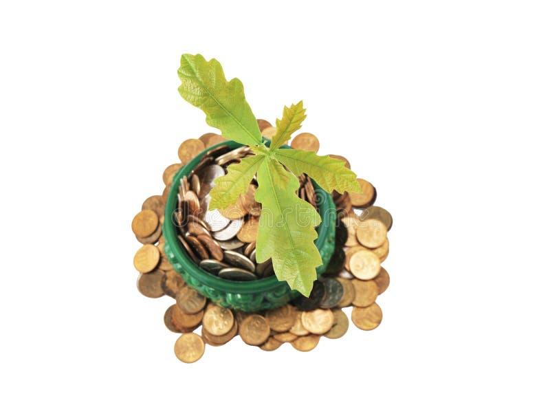 De Boom die van het geld (eik) van een stapel van muntstukken groeit. royalty-vrije stock foto