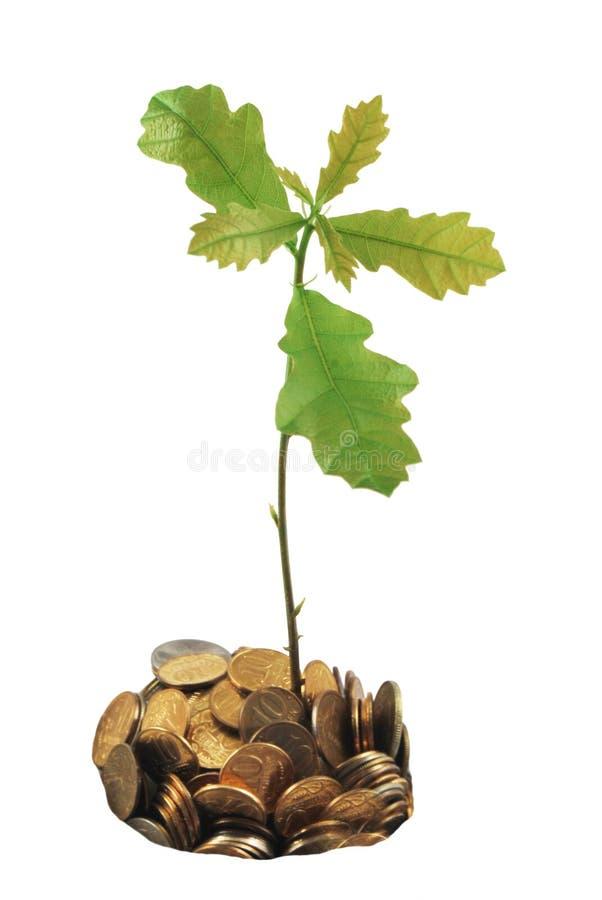 De Boom die van het geld (eik) van een stapel van muntstukken groeit. stock fotografie