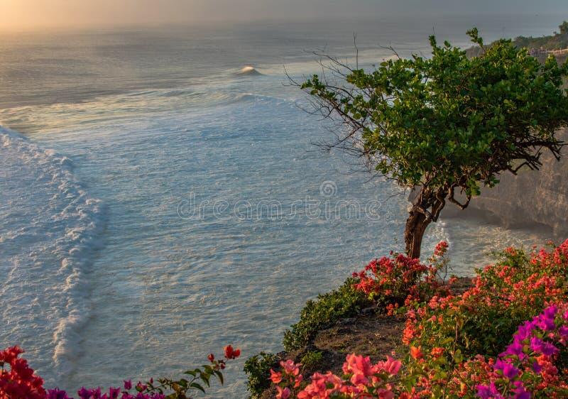 De boom en de bloemen van de Fantasticsmening op een rotsklip op Indische Oceaan met golven op zonsondergang royalty-vrije stock fotografie