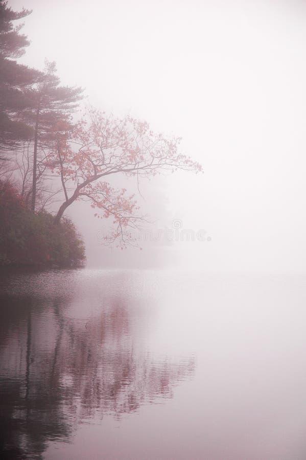 De boom en de vijver van de herfst in mist royalty-vrije stock fotografie