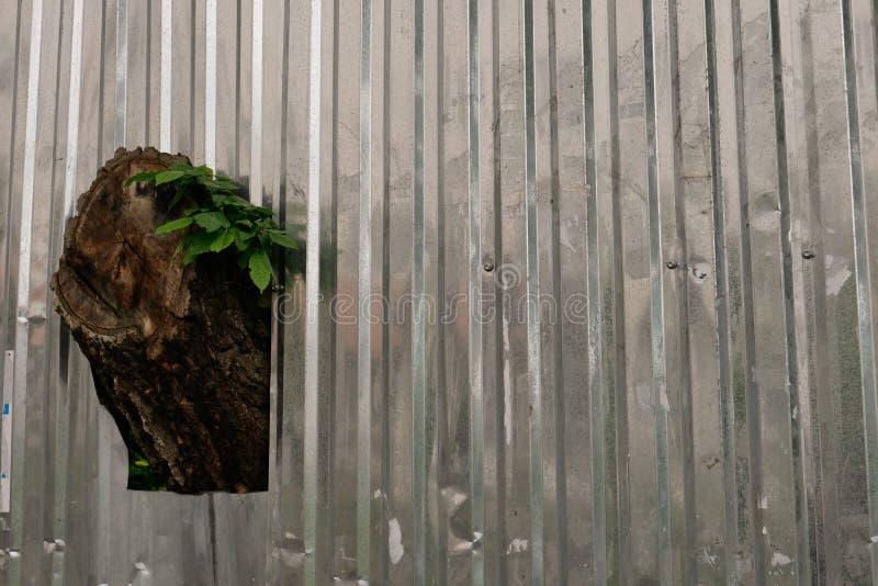 De boom groeit door de omheining van het metaalprofiel stock foto's