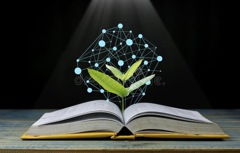 De boom groeit van boek die met licht als het krijgen van kennis op zwarte achtergrond, concept glanzen aangezien het openingsdoc stock foto