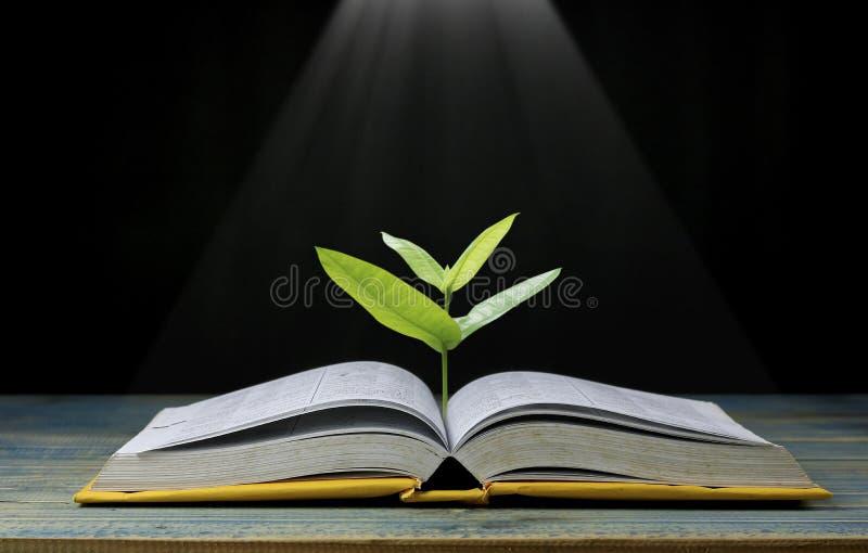 De boom groeit van boek die met licht als het krijgen van kennis op zwarte achtergrond, concept glanzen aangezien het openingsdoc stock afbeelding