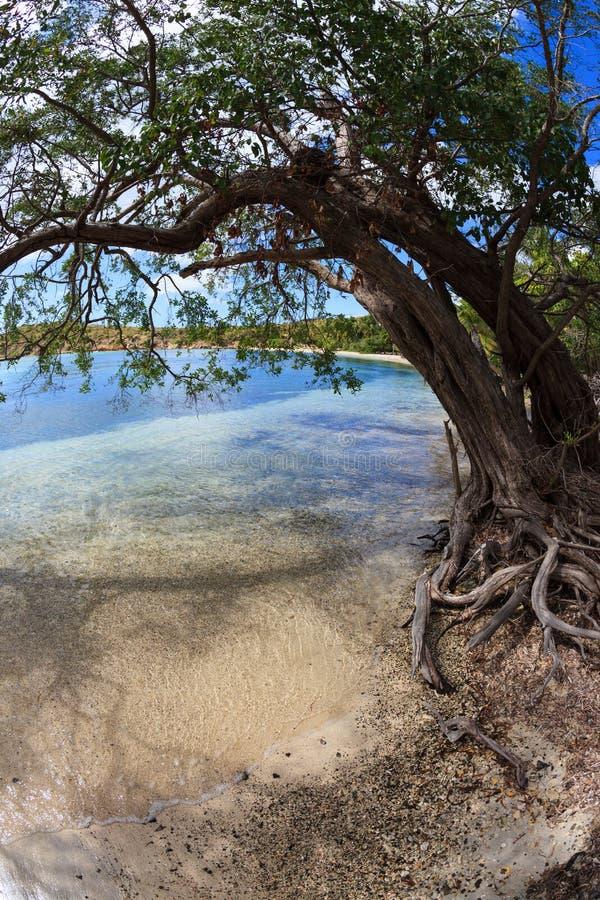 De boom hangt over de tropische haven van de Sprotbaai in St Thomas, Maagdelijke Eilanden stock afbeelding