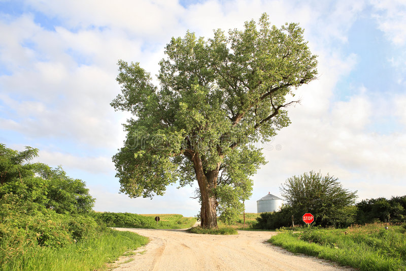 De boom in het midden van de weg royalty-vrije stock foto
