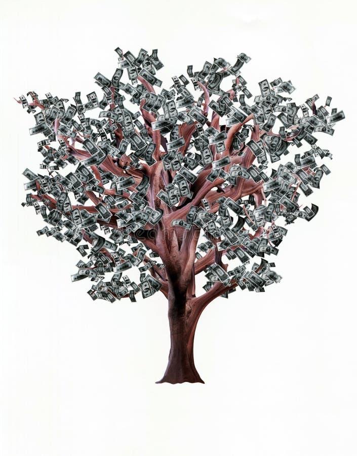 De boom met dollars in plaats van doorbladert royalty-vrije stock foto