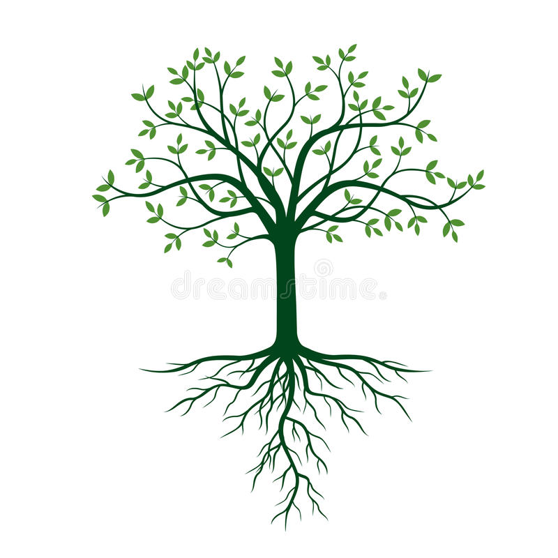De boom met wortels en groen doorbladert vector illustratie