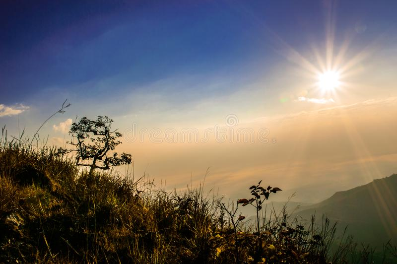 De boom mooi bij zonsopgang royalty-vrije stock afbeeldingen