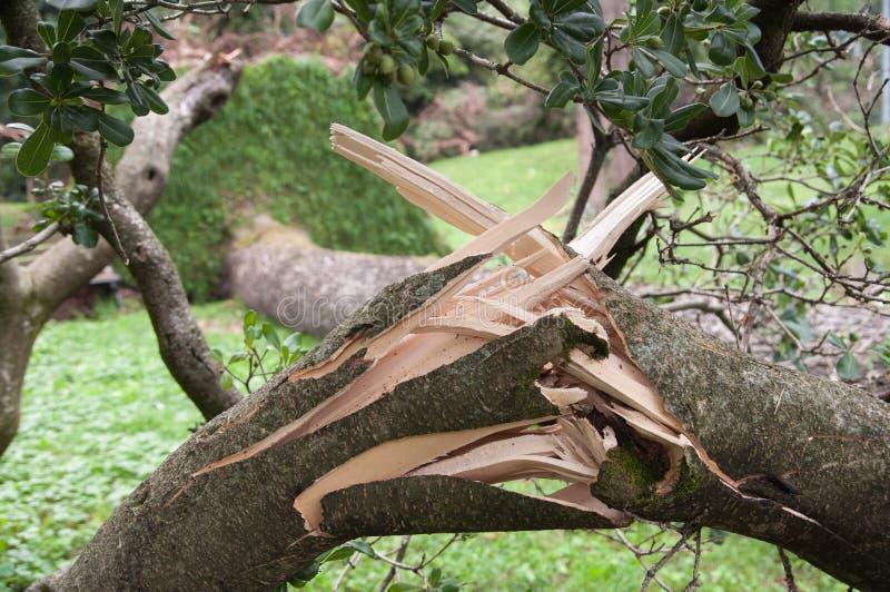 De boom ontwortelde en viel na het onweer stock foto