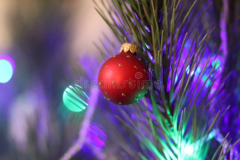 De boom rode bal van het Kerstmisnieuwjaar met Kerstmislichten stock afbeeldingen