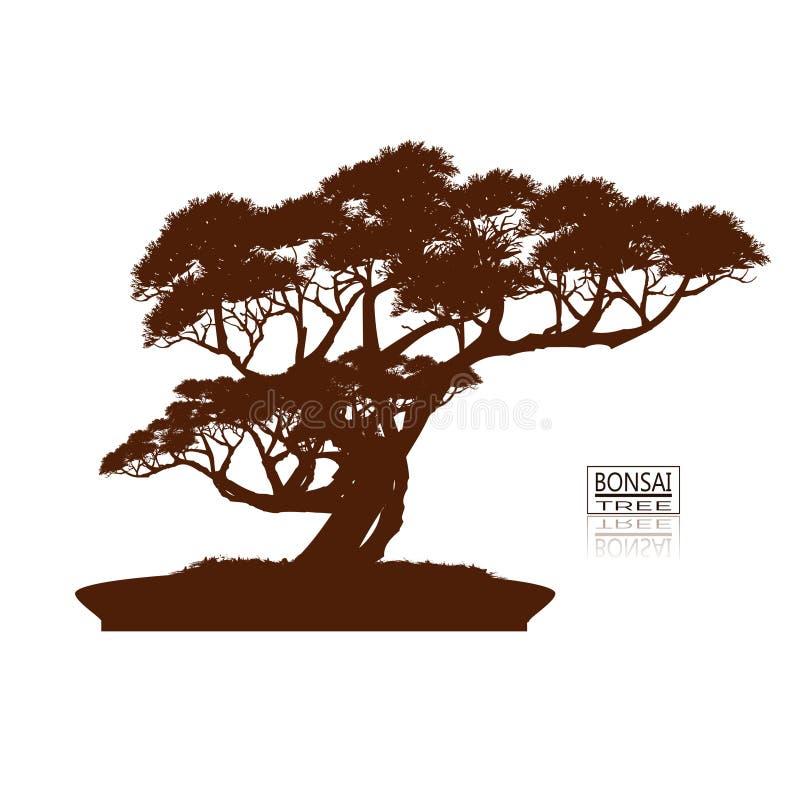 De boom van de bonsai wijnoogst Realistische stijl Gedetailleerd beeld, Vectorillustratie Decoratieve Arts. Miniboom in pot Dwerg stock illustratie