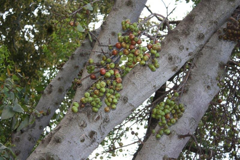 De boom van de aard stock afbeelding