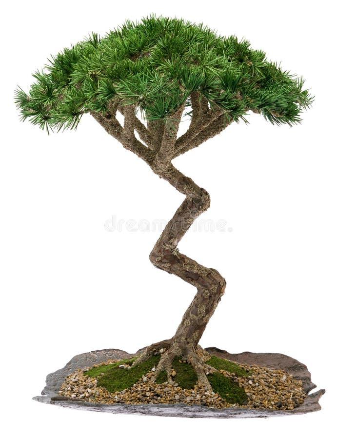 De Boom van de bonsai stock fotografie