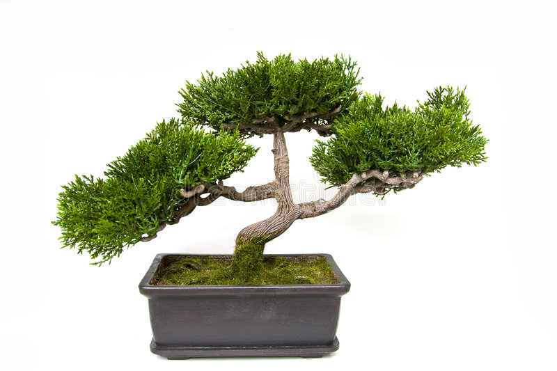 De boom van de bonsai in een pot royalty-vrije stock foto