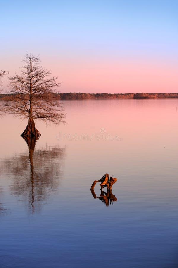 De boom van de cipres in het meer stock afbeelding