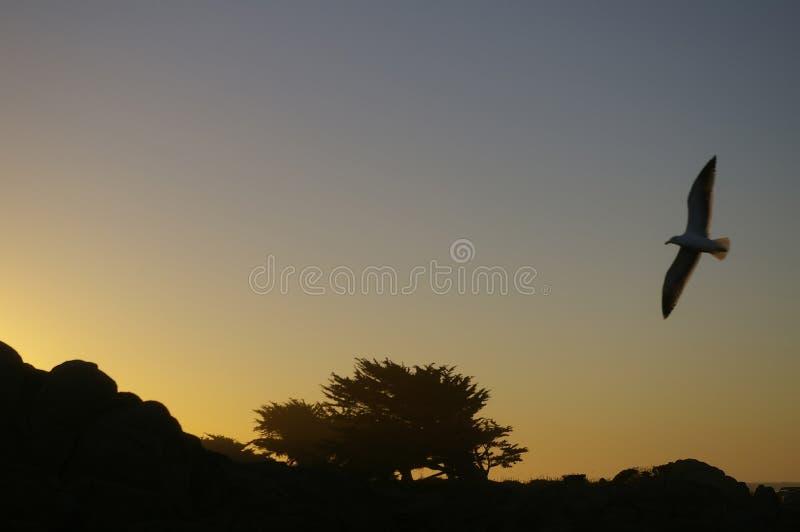 De Boom van de cipres in Zonsondergang royalty-vrije stock fotografie