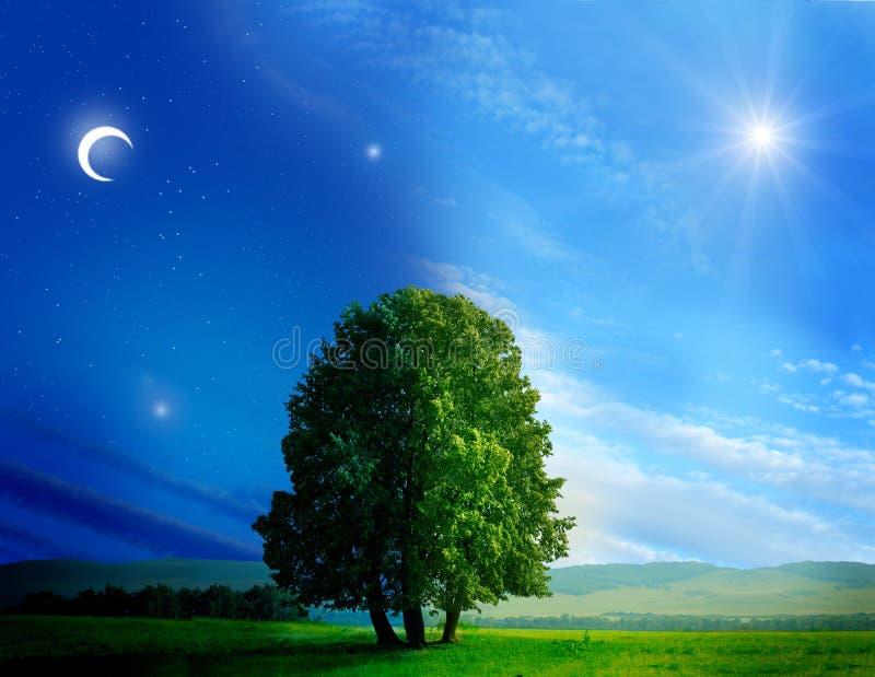 De boom van de dag en van de nacht royalty-vrije stock afbeelding