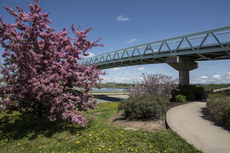 De Boom van de de lentebloesem stock afbeelding