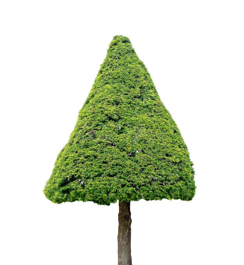 De boom van de driehoeksvorm op witte achtergrond stock foto's