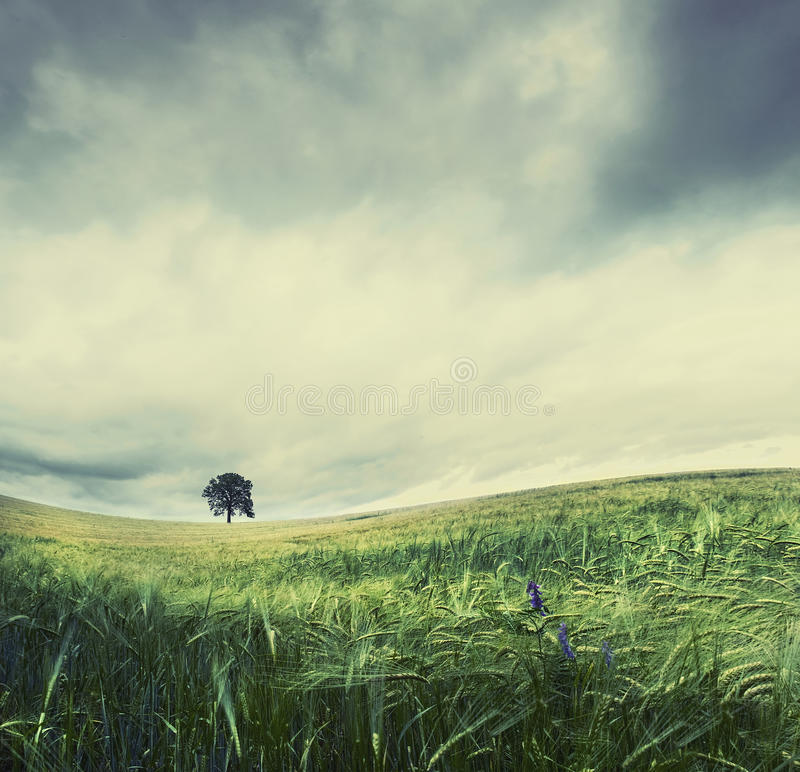 De boom van de eenzaamheid royalty-vrije stock foto