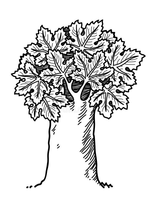 De boom van de esdoorn royalty-vrije illustratie