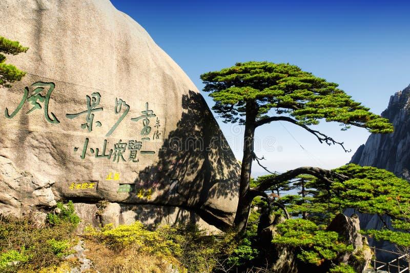 De boom van de groetpijnboom op huangshan royalty-vrije stock foto's