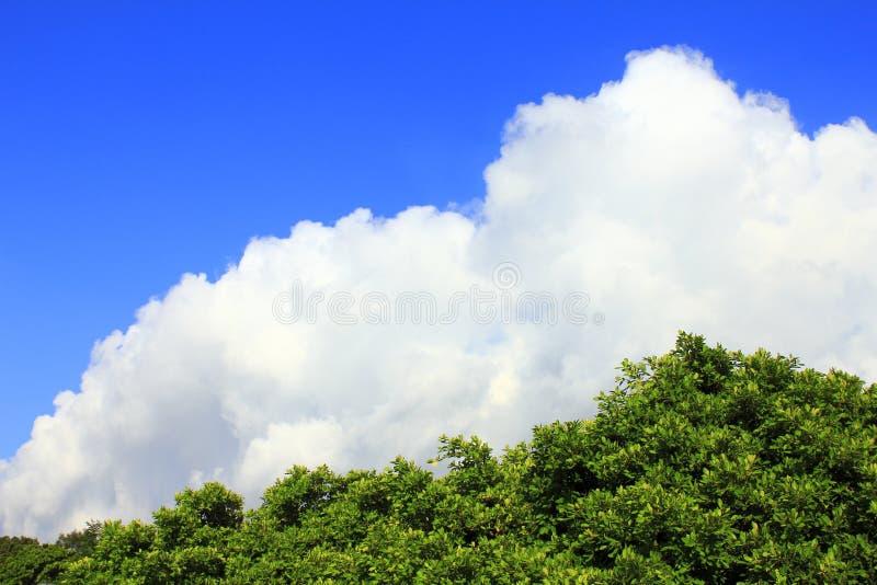 De boom van de hemelwolk royalty-vrije stock fotografie