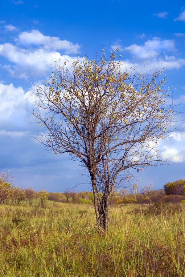 De boom van de herfst stock fotografie
