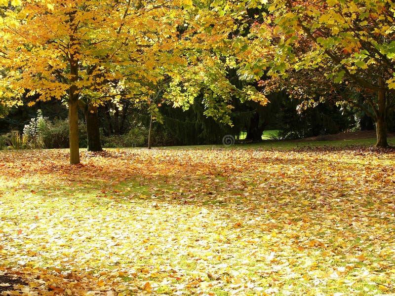 Download De boom van de herfst stock afbeelding. Afbeelding bestaande uit geel - 293271