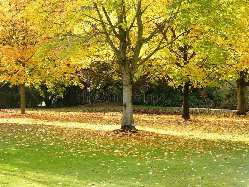 Download De boom van de herfst stock afbeelding. Afbeelding bestaande uit boomstam - 294207