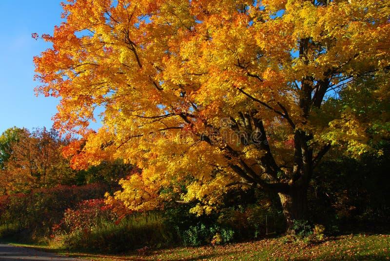 De boom van de herfst met de schommeling van het jonge geitje royalty-vrije stock fotografie