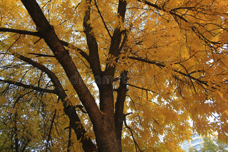 De boom van de herfst Vector beschikbare illustratie stock foto's