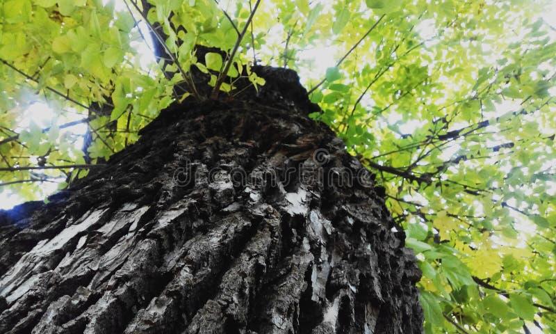 De boom van de herfst Vector beschikbare illustratie stock fotografie