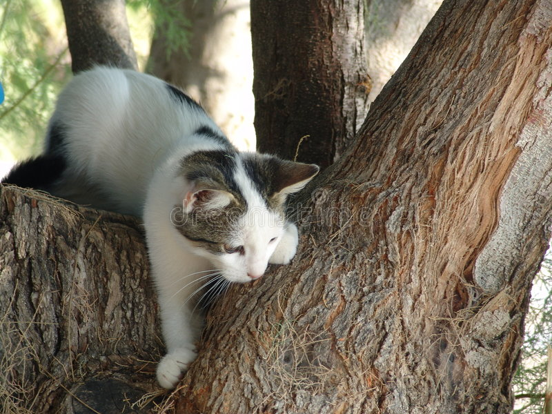 De Boom van de kat stock afbeeldingen