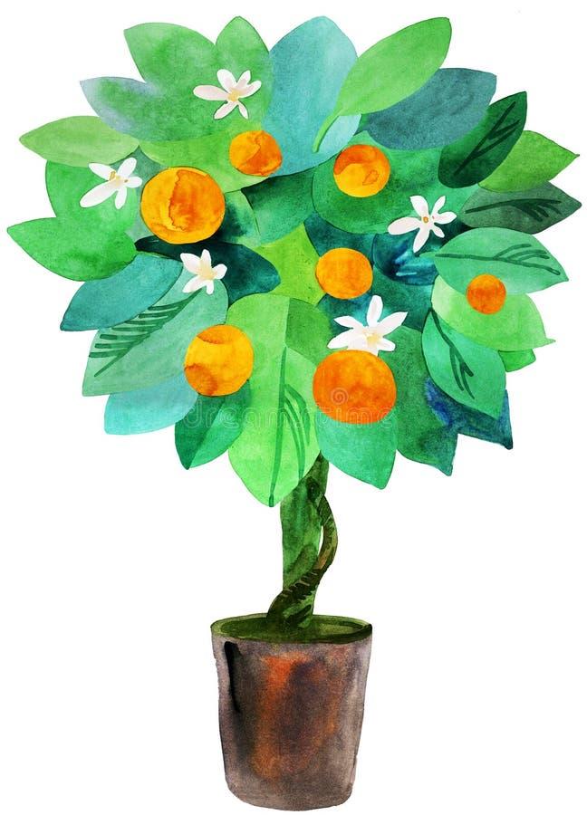 De boom van de mandarijn in een pot royalty-vrije illustratie