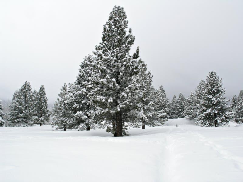 De boom van de pijnboom die met sneeuw wordt behandeld stock fotografie