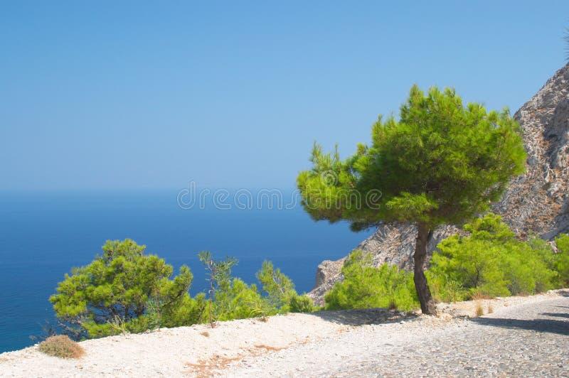 De boom van de pijnboom, Santorini, Griekenland royalty-vrije stock foto