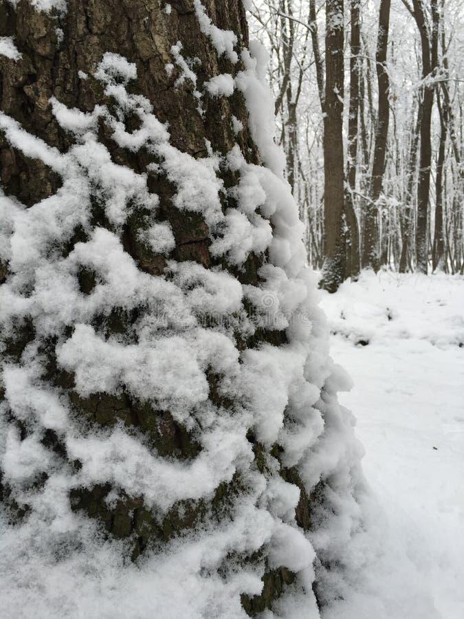 De boom van de sneeuw stock afbeelding