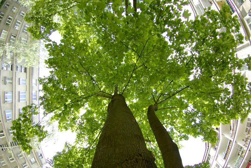 Download De boom van de stad stock afbeelding. Afbeelding bestaande uit warshau - 10782211