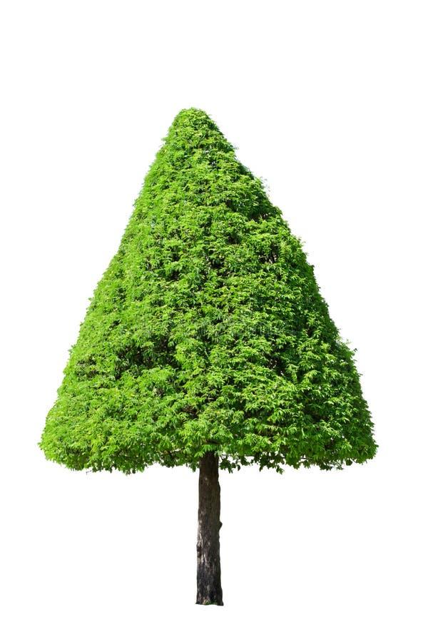 De boom van de tamarinde stock afbeelding