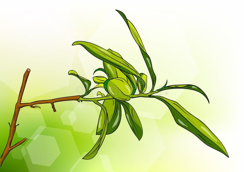 De boom van de thee stock illustratie