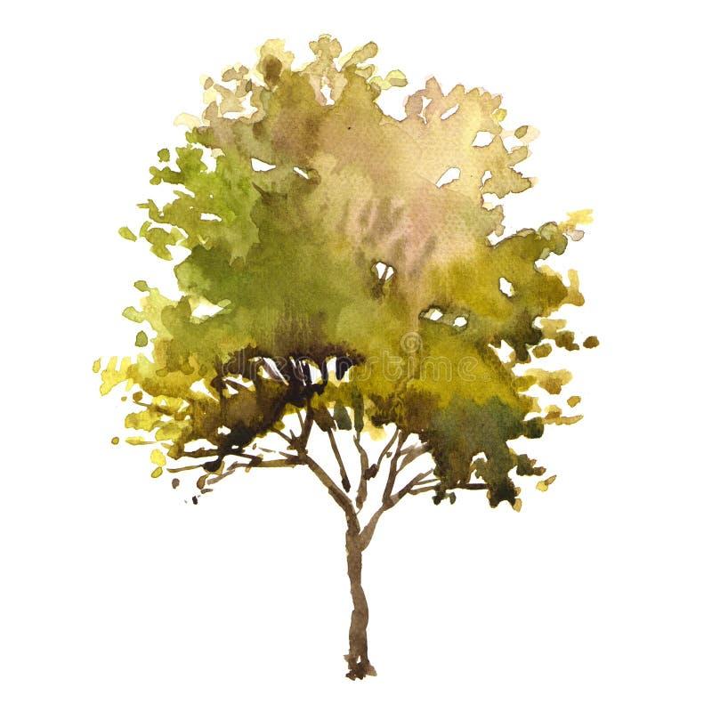 De boom van de waterverfillustratie royalty-vrije illustratie