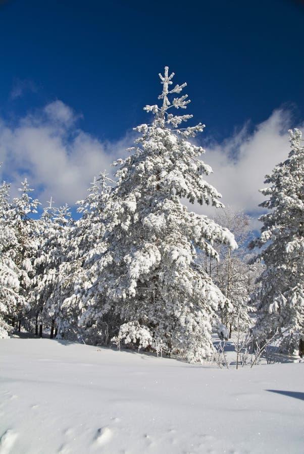 De Boom van de winter stock fotografie
