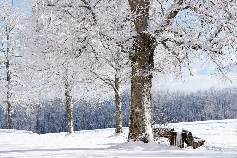 De Boom van de winter, Duitsland stock afbeeldingen