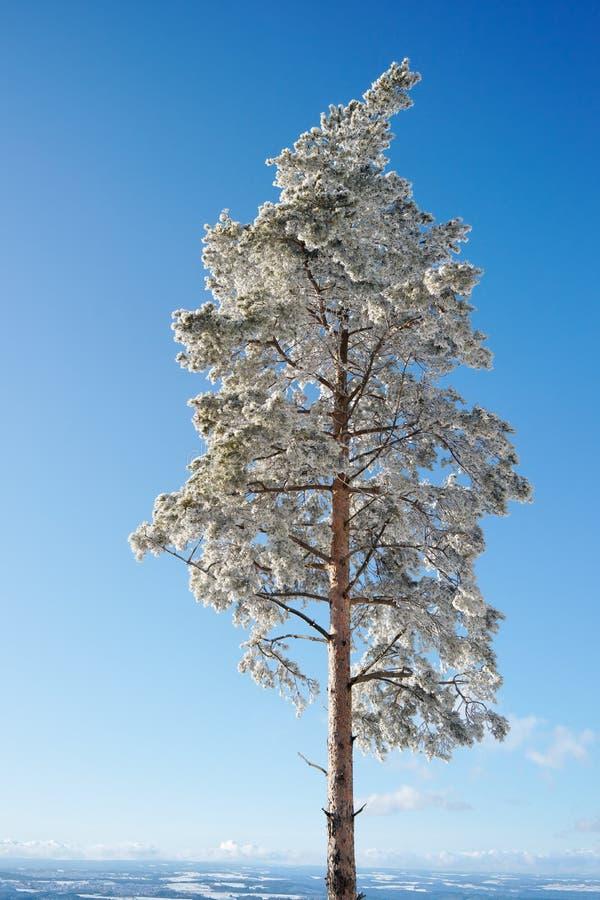 De Boom van de winter, Duitsland royalty-vrije stock foto's