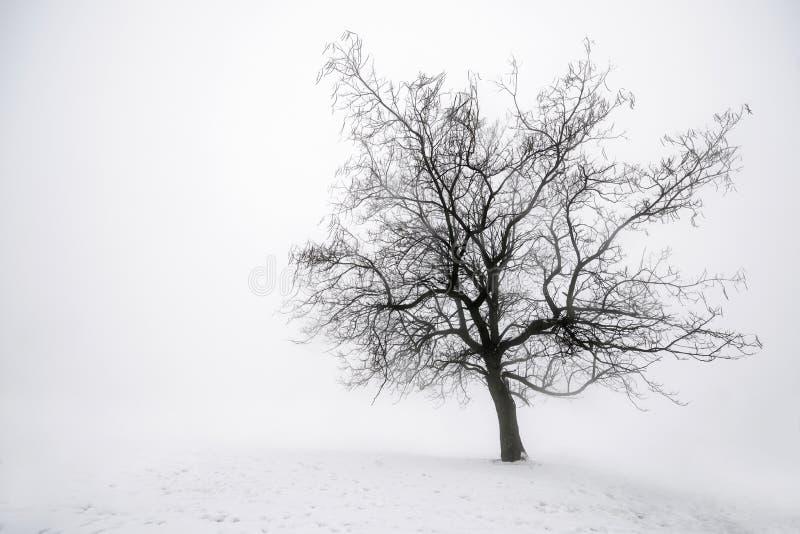 De boom van de winter in mist royalty-vrije stock fotografie
