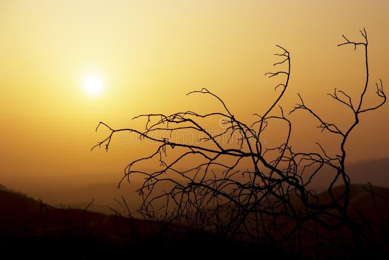 De Boom van de zonsondergang