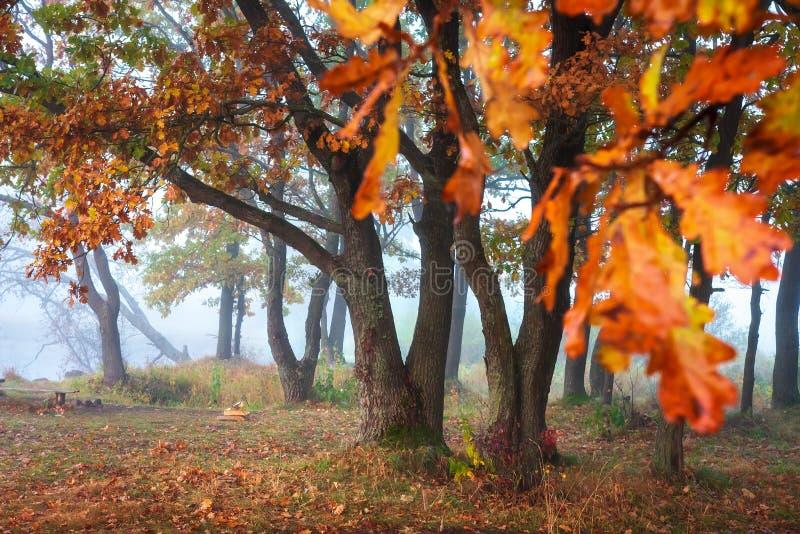 De boom van de herfst Vector beschikbare illustratie De achtergrond van de herfst Rode en oranje het bladclose-up van de kleurenK stock fotografie