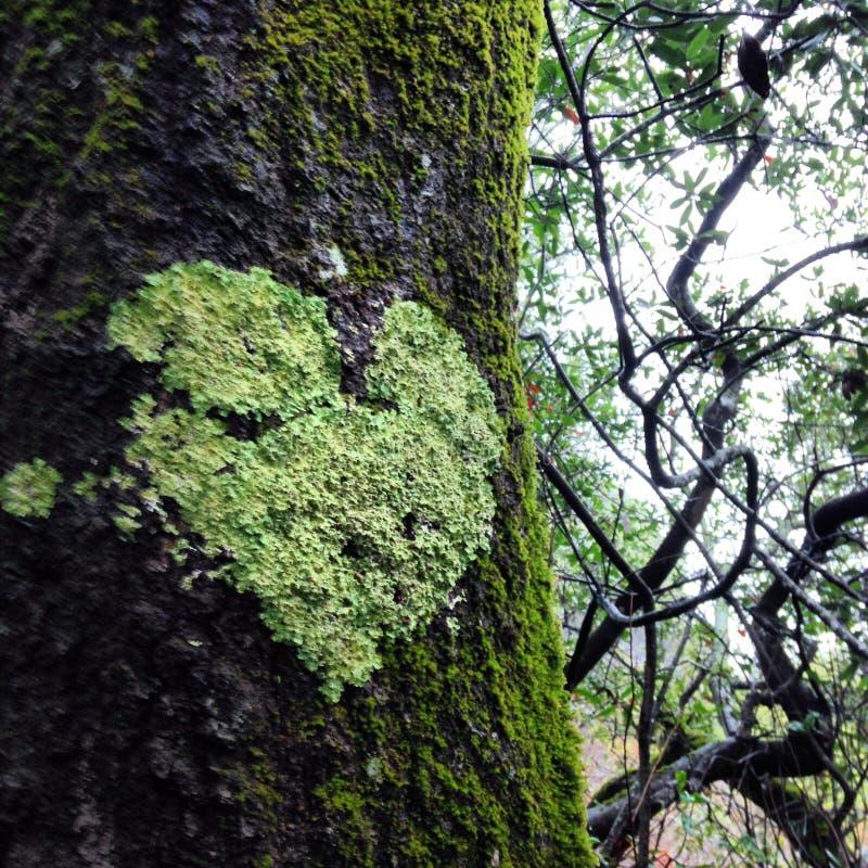 De boom van het hart royalty-vrije stock afbeeldingen