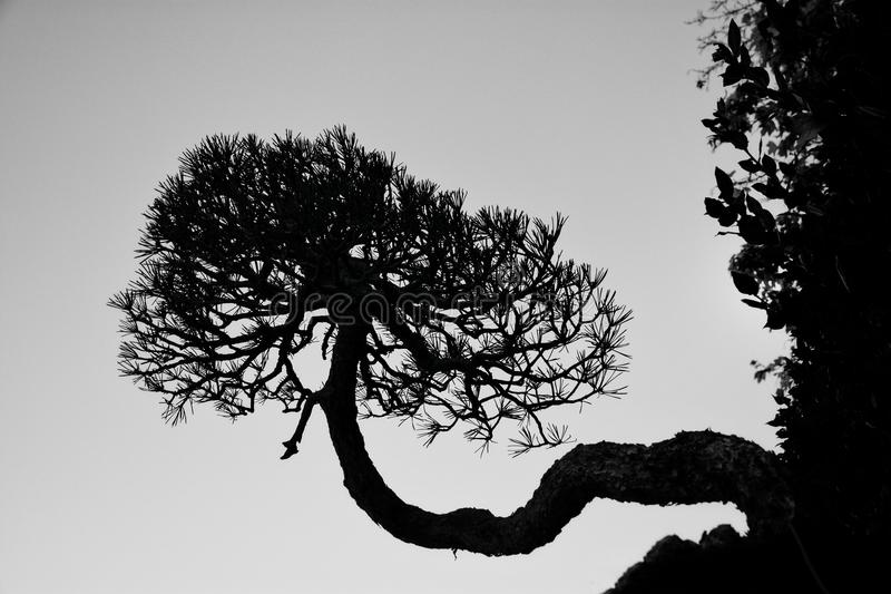 De boom van het leven groeit zijdelings stock afbeelding